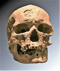 The Cro-Magnon Skull