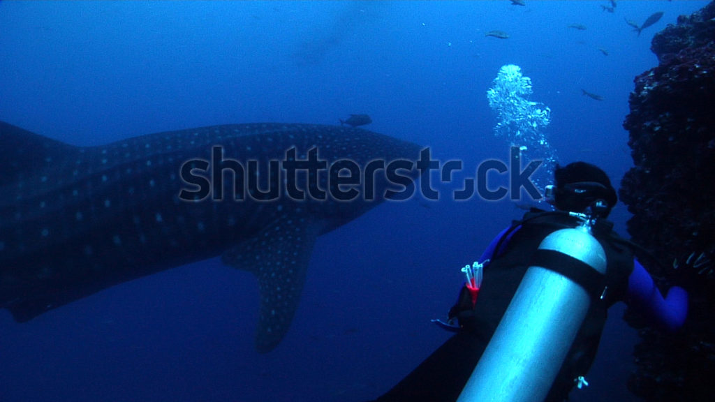 Shutterstock Offers Astounding Underwater Footage from Josh Jensen 3