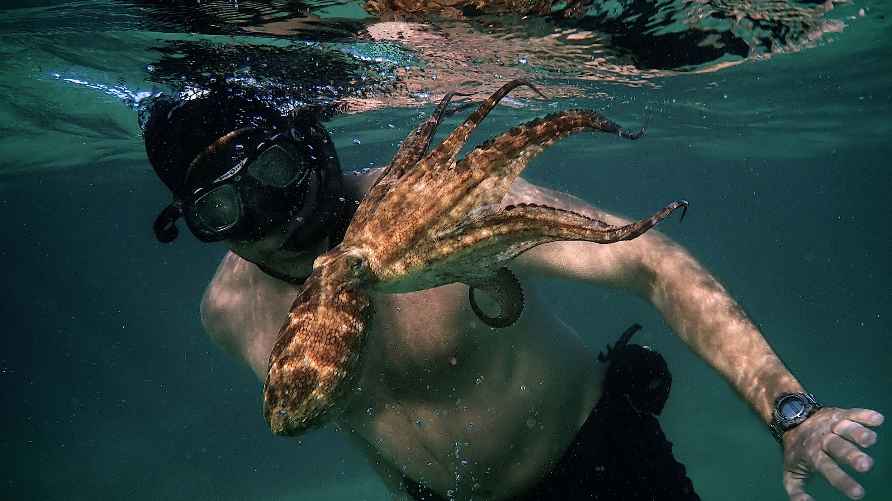 "ART OF THE CUT with ACE Eddie winner of ""My Octopus Teacher"" 21"