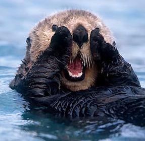 Otter_square.jpg