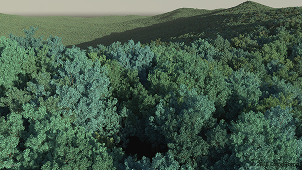 Redshift3D Forest