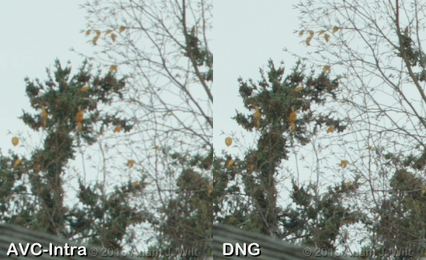 AVC-Intra vs. raw (DNG), pixel-for-pixel extract