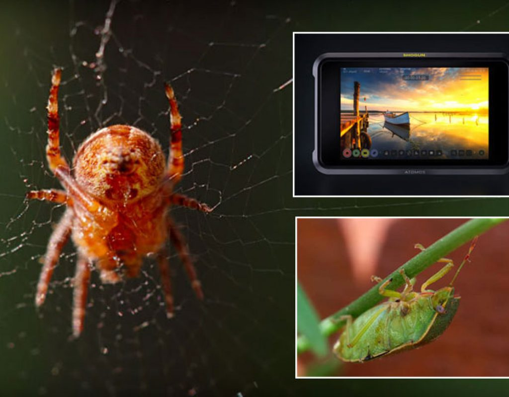 Atomos: go on safari at home and win a Shogun 7