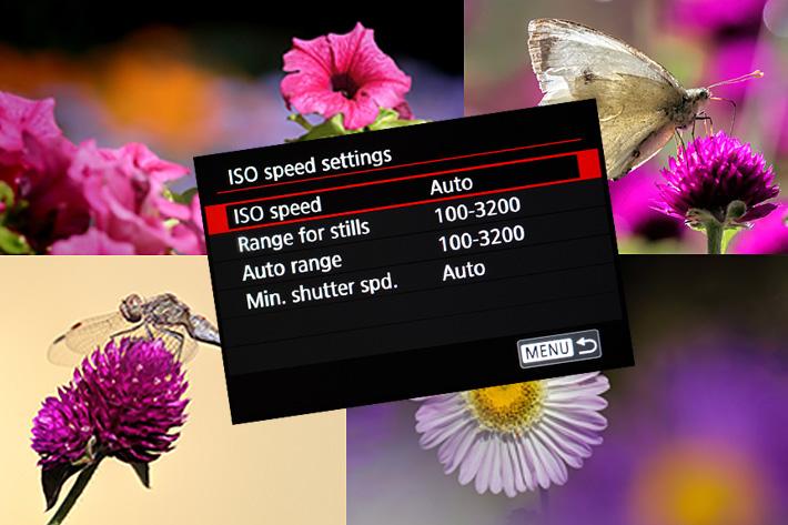 Auto ISO as a creative tool