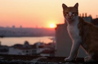 """AOTC with editor of the documentary """"KEDI"""""""