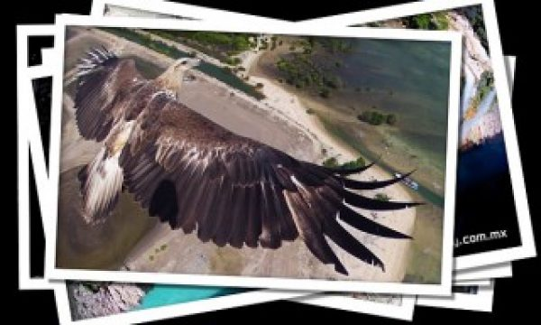 Drone Aerial Photography Contest