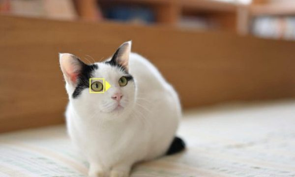 Nikon Shows Love For Animals with New Animal-Detection AF