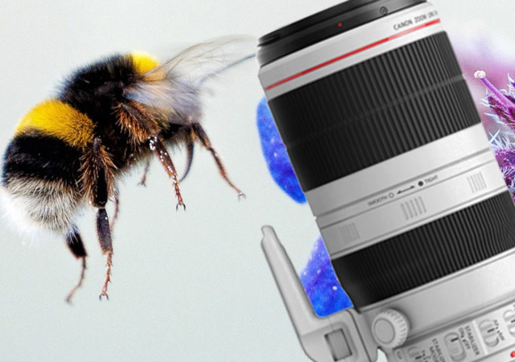 Gold Award for Canon EF 100-400mm f/4.5-5.6L IS II USM 1