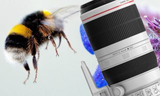 Gold Award for Canon EF 100-400mm f/4.5-5.6L IS II USM
