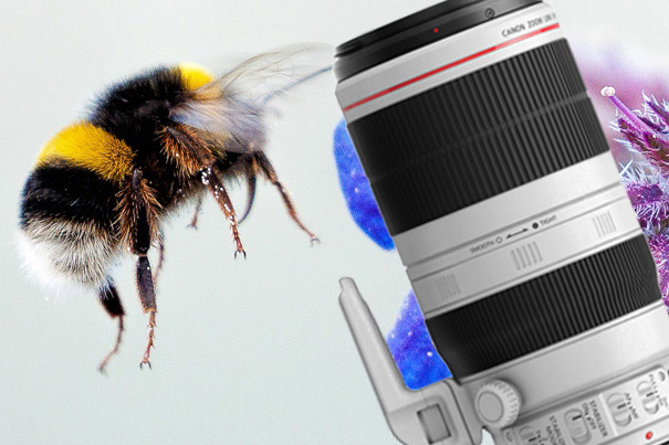 Gold Award for Canon EF 100-400mm f/4.5-5.6L IS II USM 6