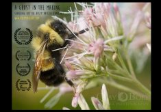 Clay Bolt: filming bees at high-speed