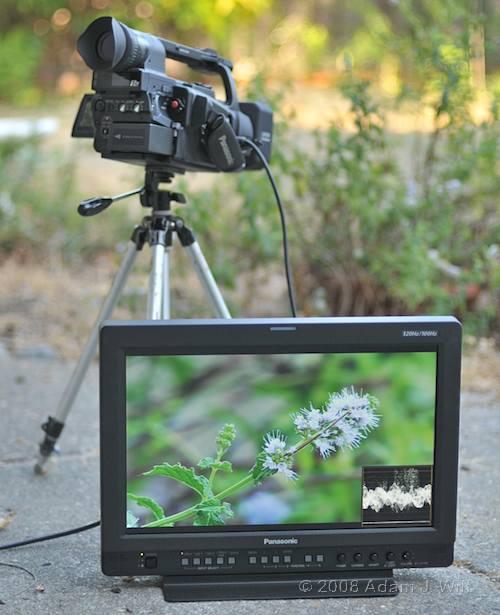 "Review: Panasonic BT-LH1760 17"" LCD Monitor 43"
