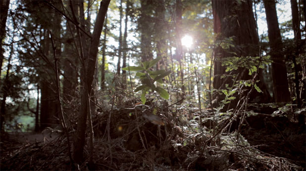 BEHIND THE SCENES: Smoke in the Woods with the Canon 5D 34