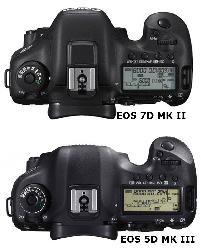 EOS 7D Mark II: the Baby EOS-1D X by Jose Antunes - ProVideo