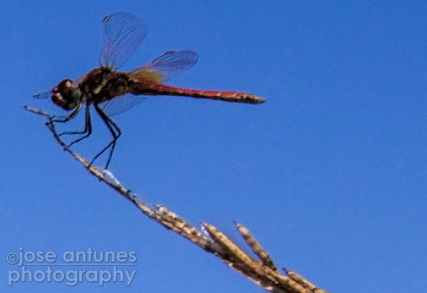 Wide-angles and Dragonflies 10