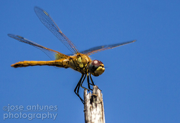 Wide-angles and Dragonflies 12