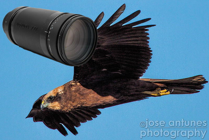 Long lenses like the old Tamron 200-400 have been used by wildlife photographers for a long time
