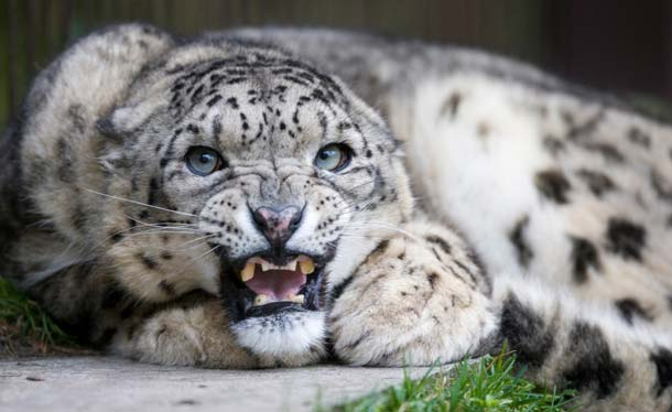 Snow Leopard: Hopes, Misunderstandings, and Gotchas 3