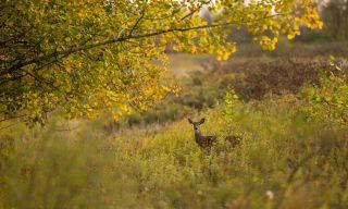 Atmospheres - deer