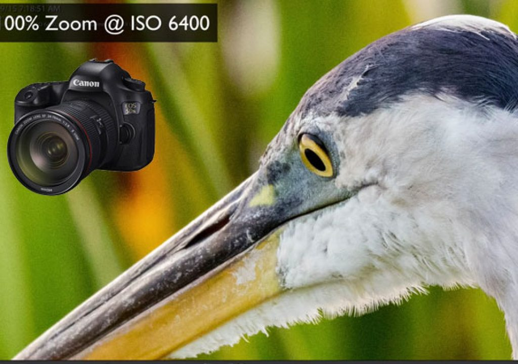 EOS 5DS R: A Real World Review 1