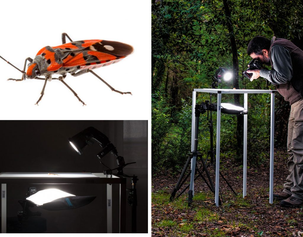 Rogue FlashBenders: a decade of evolution in light shaping