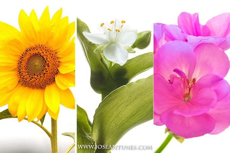 flowerswhite01.jpg