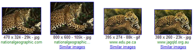 Google Labs launch similar Images 8