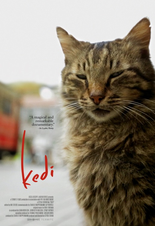 "AOTC with editor of the documentary ""KEDI"" 26"