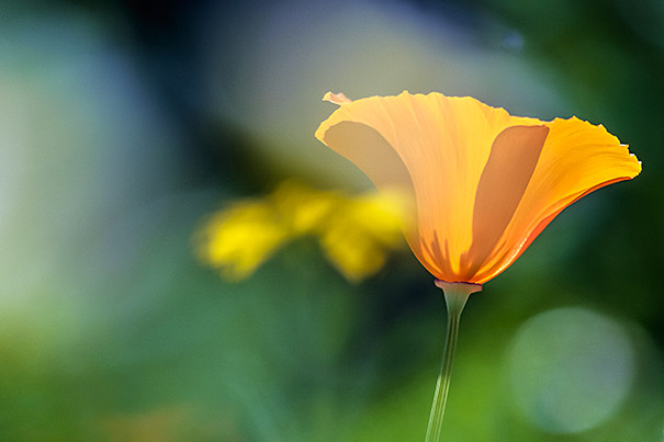 lensesandflowerssizes jose antunes006