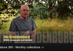 Jim Brandenburg: a photographer's secret videos