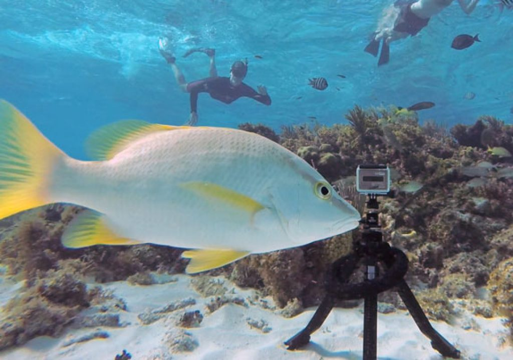Pakpod: a packable underwater tripod 1