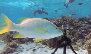 Pakpod: a packable underwater tripod