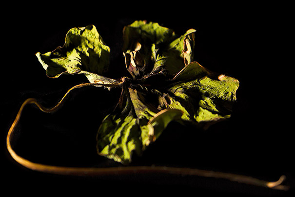 rogueflashbendeflowers02