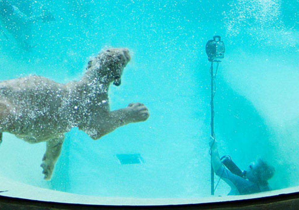shooting_underwater.jpg