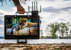 SmallHD facing a rename with three new oversized HDR monitors