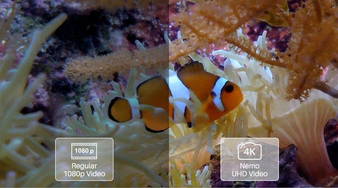 Nemo, Titan and Mito: three new 4K underwater drones for filmmakers 20