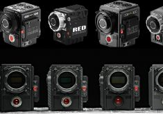 RED cameras at Wildscreen 2016